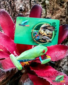 Father's Day is coming up! 😎❤ Give a gift card to reptile lovers or we have other great gift ideas in store! Come see us or check our online boutique! #MagazooReptiles Reptile Accessories, Come And See, Reptiles, Great Gifts, Lovers, Gift Ideas, Boutique, Check, Cards