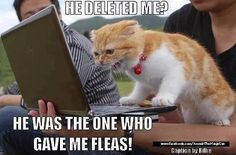 He deleted me? He's the one who gave me fleas! ~funny cat~