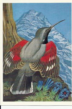 Vintage  Russian Postcard  Bird Stenolaz