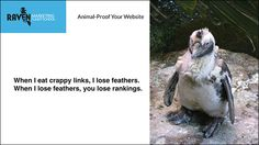 How to animal-proof your website from #SEO algorithm changes