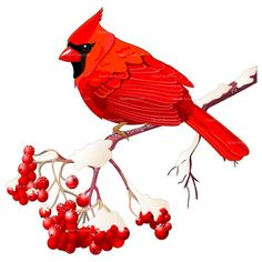 clip art illustration of a red cardinal bird sitting on a branch rh pinterest com cardinal clip art free images cardinal clip art free images