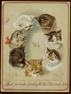I've never been a fan of cats. If I got this card,... - Weird Christmas