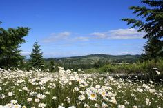 DALLAS, OREGON, LAND FOR SALE...SO PRETTY...15019 Oakdale Road, Dallas OR - Trulia