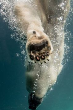 21 Cool Facts About Polar Bears