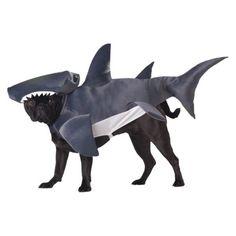 This pet shark dog costume is a funny pet costume for dogs. This pet shark dog costume will frighten all the beach-goers! Dog Shark Costume, Shark Costumes, Pet Halloween Costumes, Pet Costumes, Dog Halloween, Halloween Ideas, Costume Ideas, Animal Costumes, Halloween Season