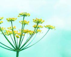 botanical art print flower photography fine art by mylittlepixels
