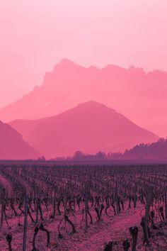 Pink | Pastel | Rosé | Salmon | Peach | Blush | Pinku | Rozovyy | Rosa | ピンク | розовый | Rosado | Vin rouge (by Clément Skladanek)