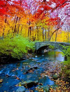 Cores do outono próximo a Corvallis, Oregon, USA. Fotografia: friend of Holly Copeland on Little Miss Holls. Foto Nature, All Nature, Autumn Nature, Beautiful World, Beautiful Places, Beautiful Scenery, Simply Beautiful, Beautiful Nature Pictures, Beautiful Forest