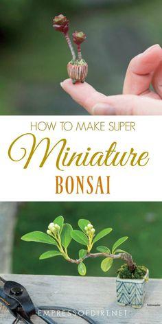 Grow your own super-mini bonsai from Miniature Bonsai: The Complete Guide to Super-Mini Bonsai. #gardening #gardens #bonsai #miniaturegardens #miniaturegardening #empressofdirt