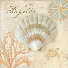 Nautical Shells II Canvas Art - Cynthia Coulter (24 x 24)