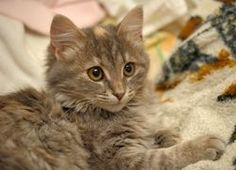 Reasons to adopt a fostered or shelter cat
