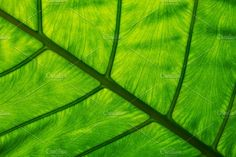 Tropical green leaf texture by salmon.black on @creativemarket