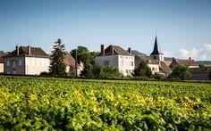 Montrachet Vineyard, Burgandy, France. 12 Bucket List Wine Destinations to Experience Now | Travel + Leisure