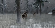 https://flic.kr/p/21Y9Ays | Fallow Deer-014 | The Fallow Deer at Binemust maps.secondlife.com/secondlife/Binemust/132/156/717   Thank you for such beauty, dear Bine Rodenberger!