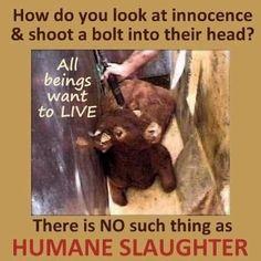 Because you have no soul. Go vegan! Mon Combat, Reasons To Go Vegan, Vegan Quotes, Why Vegan, Stop Animal Cruelty, Vegan Animals, Save Animals, Animal Welfare, Animal Quotes