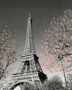 Paris Eiffel Tower Blossoms Decorative Photography Travel City Poster Print, Unframed This poster features an image of trees in blossom, in front of the Eiffel Tower in Paris, France. Paris Wall Decor, Paris Wall Art, Torre Eiffel Paris, Paris Eiffel Tower, Eiffel Towers, Thema Paris, Aloita Resort, Photo Polaroid, Paris Wallpaper