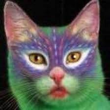 Resultado de imagem para gato pelo curto ingles branco
