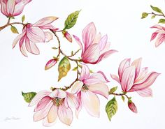 Magnolia Painting - Magnolias-jp3875 by Jean Plout