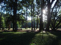 Parque do Ibirapuera em São Paulo - verde, parques, esportes, animais e muito mais
