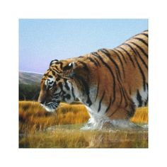 A Tiger loves water Stretched Canvas Prints