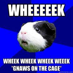 Wheeeeek wheek wheek wheek weeek*gnaws on the cage*