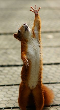 Please God give me some nuts. ... And ... stretch