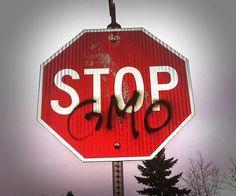 GMO i absolutne minimum, które musisz wiedzieć na ten temat. Jeśli myślisz, że problem GMO Ciebie nie dotyczy to się grubo mylisz...  #rytmynatury #gmo #roundup