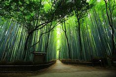 京都市右京区嵯峨野々宮町にある嵯峨野 竹林の道(ちくりんのみち)。京都嵯峨・嵐山の人気の観光名所。竹の香りと澄んだ空気につつまれる風情ある美しい竹の道。早朝の誰もいない竹林の道。2016年6月9日訪問、撮影。