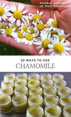 23 maneras de utilizar la manzanilla - Blog Academia de hierbas