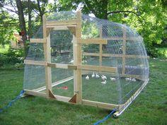 Chicken tractor - hoop house