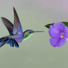 A hummer and shades of violet ...