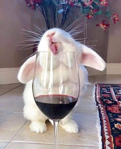24 Cutest Animal Pictures Guaranteed to Make You Smile Today - JustViral.Net - 24 Cutest Animal Pictures Guaranteed to Make You Smile Today – JustViral. Baby Animals Super Cute, Cute Baby Bunnies, Cute Little Animals, Cute Funny Animals, Funny Animal Videos, Cute Cats, Cute Babies, Bunny Bunny, Bunny Meme