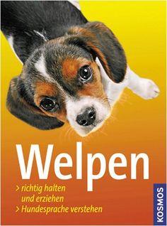 Welpen: Richtig halten und erziehen. Hundesprache verstehen