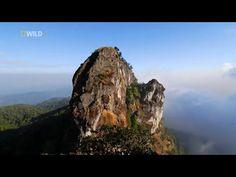 [Nat Geo Wild HD] Wild Thailand HD (Nature Documentary) - YouTube