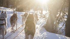 Be a Musher, husky safaris in pure nature - Rovaniemi, Lapland, Finland