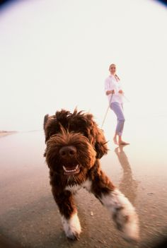 3 Ways to Measure Your Terminally Ill Pet's Quality of Life by Dr. Jennifer Coates, DVM