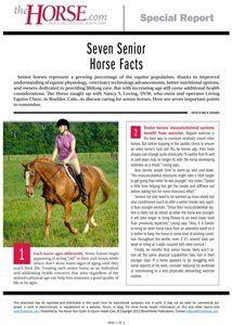 7 senior horse facts
