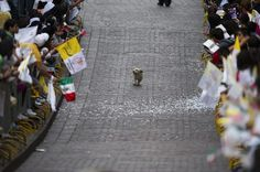 The people of Mexico were lined up along the streets to see the Pope. This little guy thought otherwise.---- The way Anouk perceives parades? I think so! Little Dogs, Big Dogs, Small Dogs, Funny Animals, Cute Animals, Animal Funnies, Crazy Animals, Animal Memes, Guys Thoughts