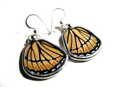 cool earings - even though a butterfly had to lose its wings for them. . .