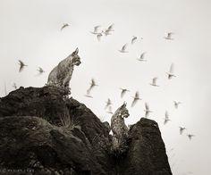Imagine Birds by Marina Cano http://www.marinacano.com