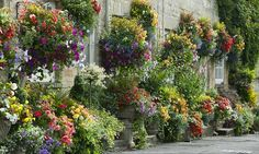 Get hanging baskets right and enjoy six months of flowering glory with these tips...