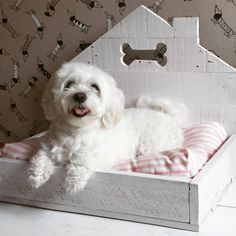 Camas perro : Casita en color blanco