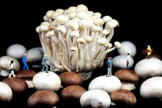 Creative photography, little people on food, miniature art, mushroom, home decor, wall art. By Paul Ge.