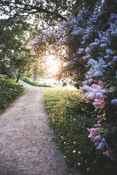 Summer in Finland makes me want to walk in floral paths...
