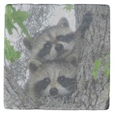 Shop Raccoons hires Bill Wilbanks Stone Coaster created by nationalwildlife. Raccoons, Stone Coasters, Animals, Animales, Animaux, Animal, Animais