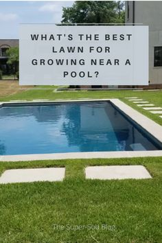 How to choose the best lawn (and mower) for near your pool. Types Of Grass, Grass Type, Zoysia Grass, No Mow Grass, Simple Pool, Diy Exterior, Pool Hacks, Pool Coping, Pool Maintenance