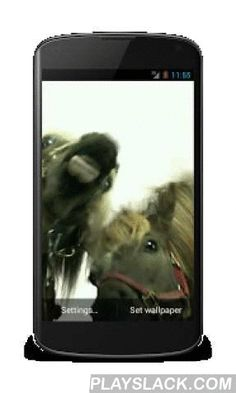 Horses Lick Screen Wallpaper  Android App - playslack.com , Horses lick screen Free video live wallpaper.Realistic live wallpaper. Displays the magic horses lick screen.This is really video live wallpaper that are very rare to find! Other wallpapers just emulating video.Personalize your smartphone with this beautiful live wallpapers!Main features:- Free!- Do NOT contains any push notifications or icon ads!- Saves to the SD card by default.- Adjustable speed (frame rate).- Compatible with…