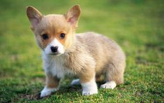 Cute Puppies :) - Puppies Wallpaper (22040876) - Fanpop fanclubs