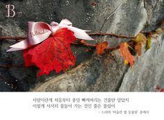 [B talk ] #Propose #가을 빛에 잘 물든 #단풍 잎이 봄 #꽃 보다 아름답듯 사랑하는 사람에게 물 들어가는 당신이 가장 아름답습니다. #Bellitadite가 제안하는 가을 #Propose로 #사랑과 #아름다움 을 완성해보세요. #프리미엄 #주얼리 #미러 #벨리타디테