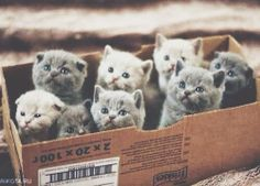 a box of kittens//